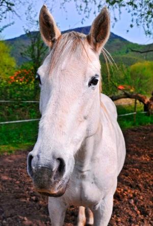 horseofcourse.jpg