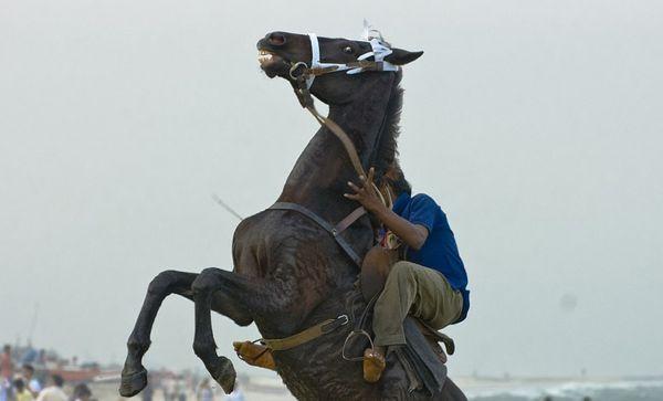 horserearing.jpg
