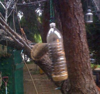jdt_squirrel.jpg