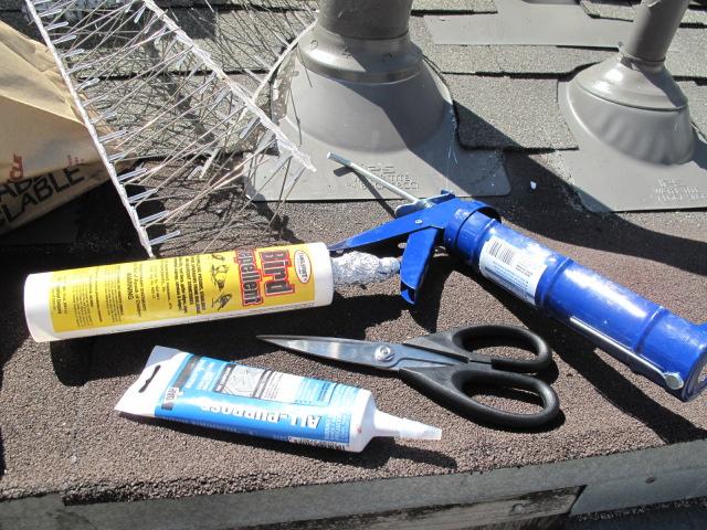 pigeon glue etc.JPG