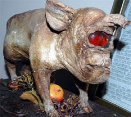 2006 01 26 Strange-Creatures-Pig