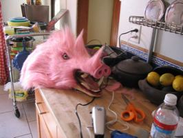 Albums V130 Kukiloca Piggy2