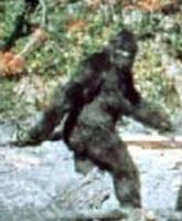 Wp-Content Patterson Bigfoot