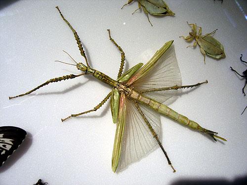 Bizarre insect