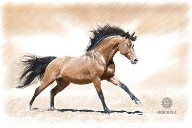 mind-galloping-horse-3