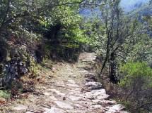Sentier-Bosc2