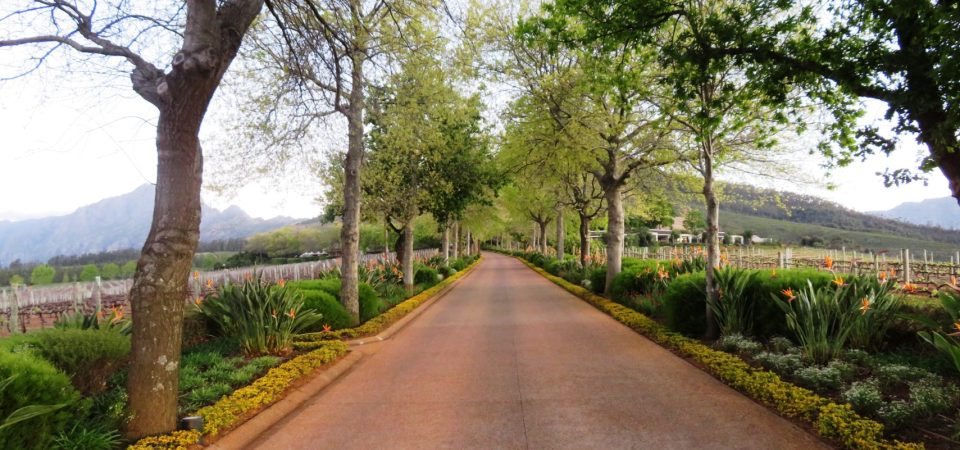 Stellenbosch ~ South Africa's Glorious Wine Country