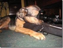 Guard dog 1
