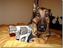 Guard dog 8