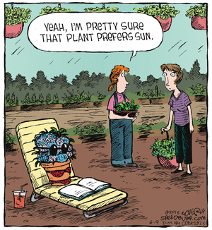 Plant prefers sun