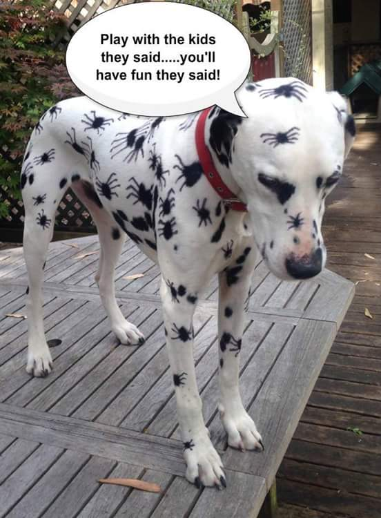 Dalmation with spider spots