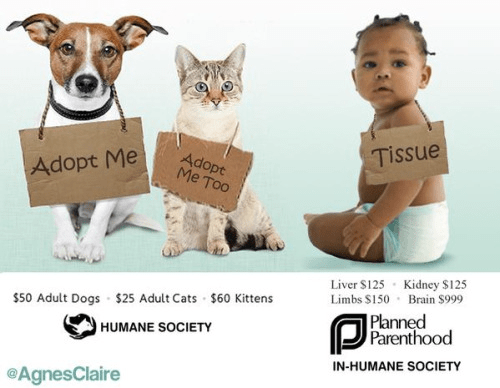 Animal adoptions and baby abortions