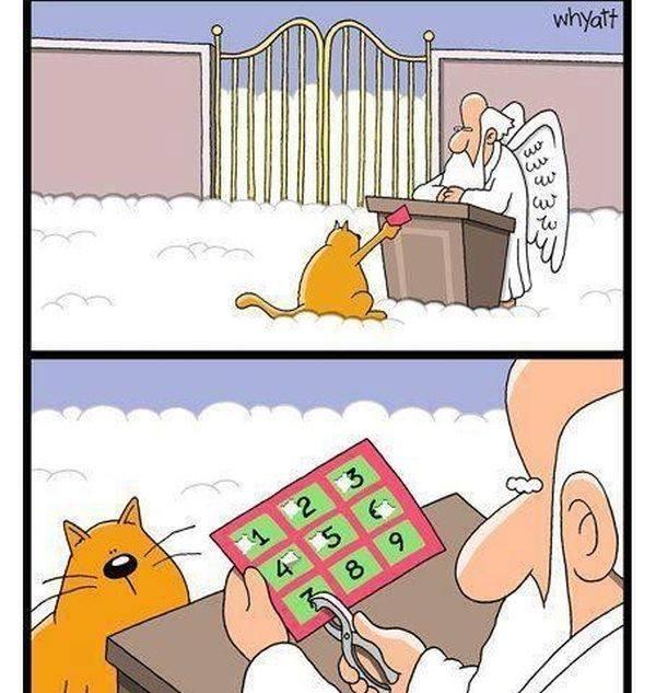 Cat Heaven ticket