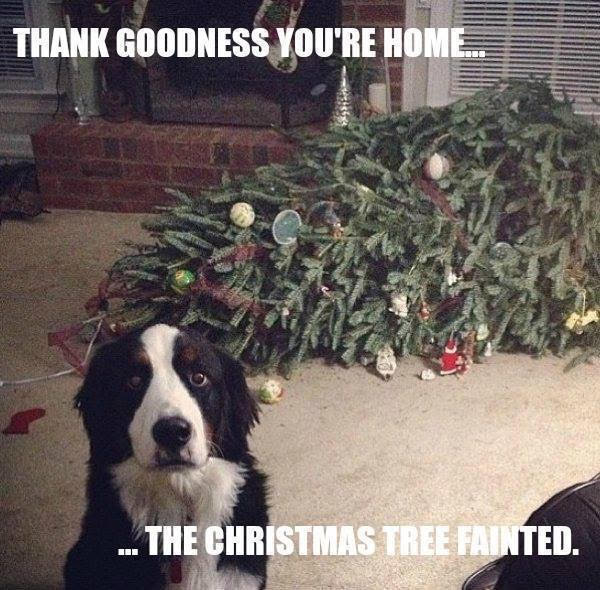Christmas tree fainted