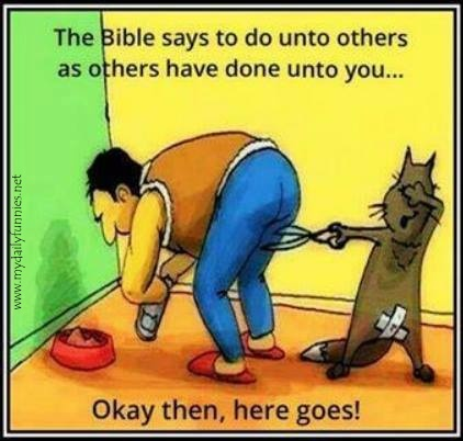 Silly cat do unto others