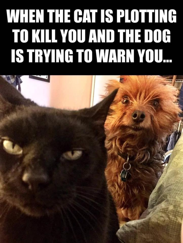 Silly cat kill dog warn