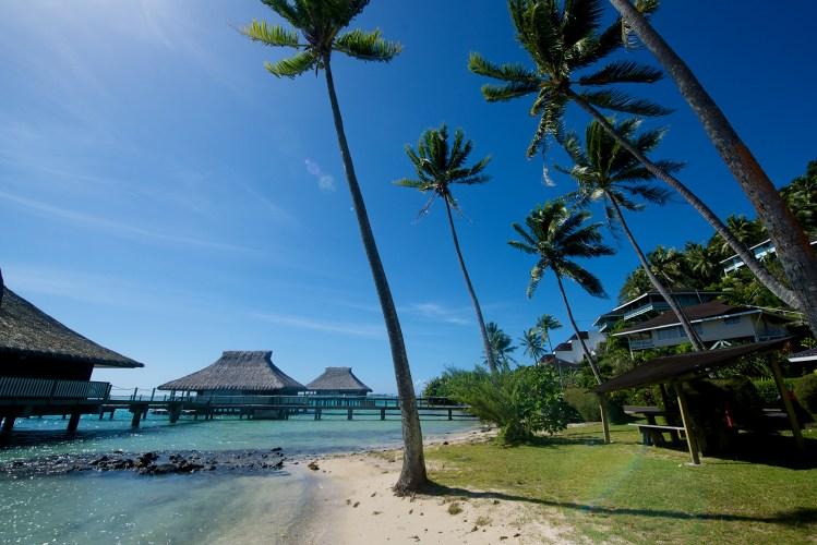 Bora Bora Beach and Palm Trees