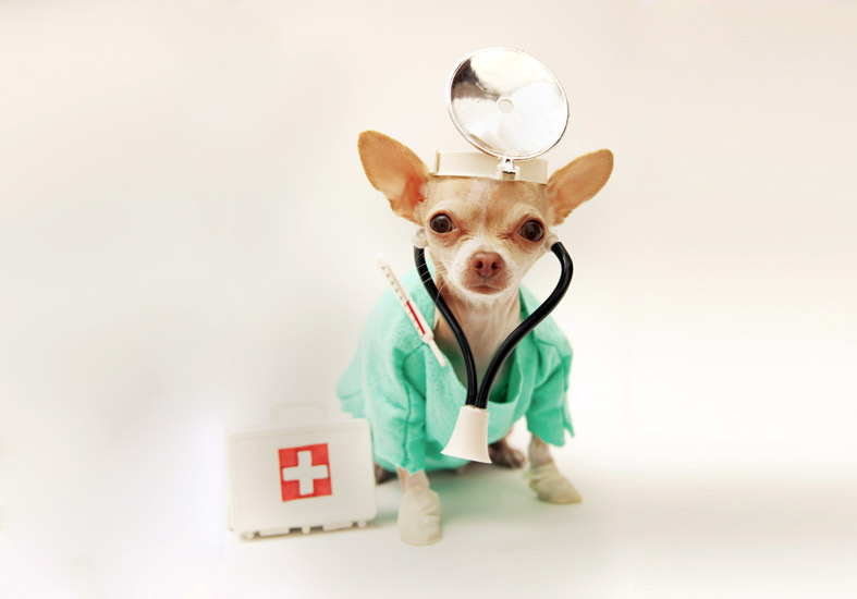 """Health Testing"" in Dogs is Limited"