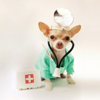 """""""Health Testing"""" in Dogs is Limited"""
