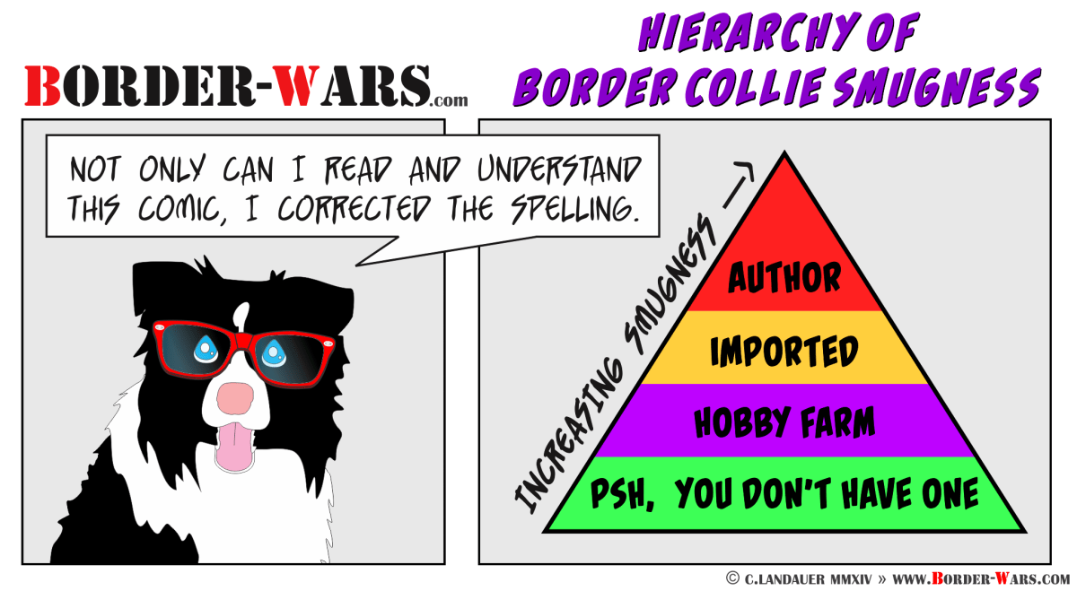 The Hierarchy of Border Collie Smugness