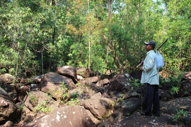 Koh Kong jungle trek Koh Kong jungle trekking