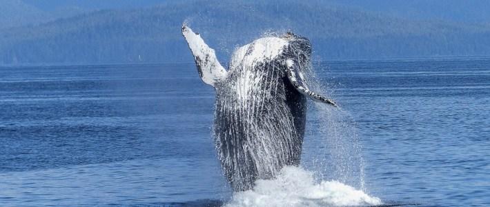 Long Beach Whale Watching