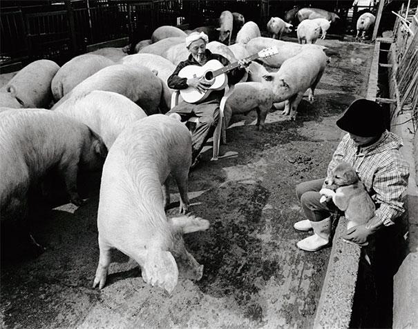 otchan-cute-pig-farmer-toshiteru-yamaji-6