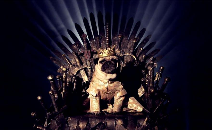 cute-pugs-game-of-thrones-pugs-of-westeros-5