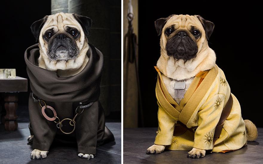 cute-pugs-game-of-thrones-pugs-of-westeros-6