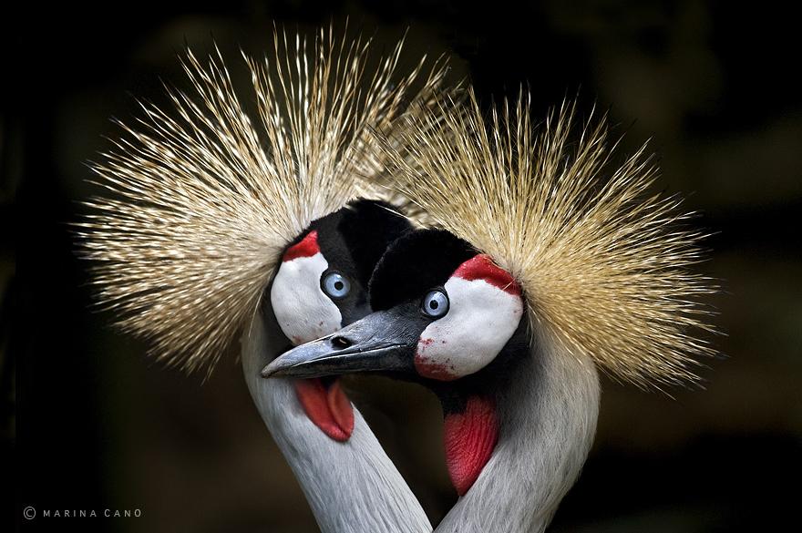 animal-wildlife-photography-marina-cano-16