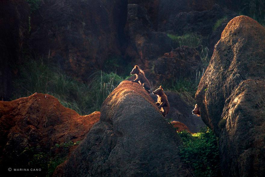 animal-wildlife-photography-marina-cano-19