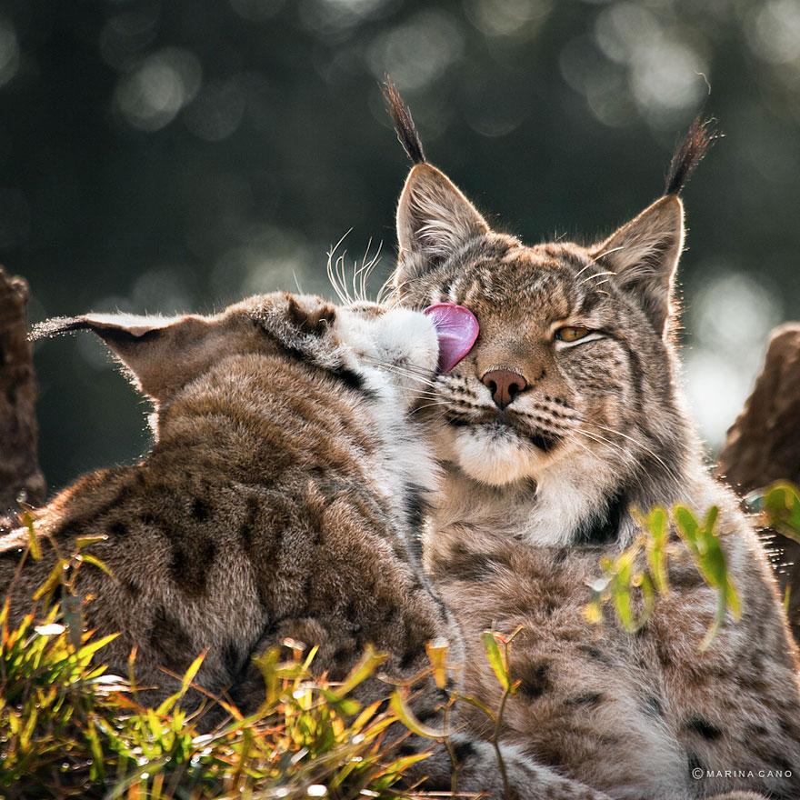 animal-wildlife-photography-marina-cano-25