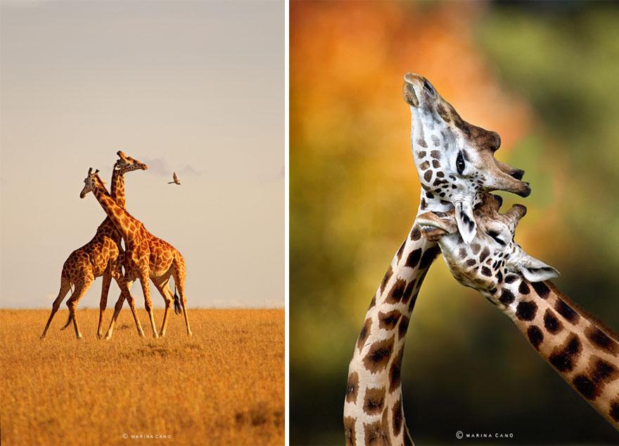 animal-wildlife-photography-marina-cano-4