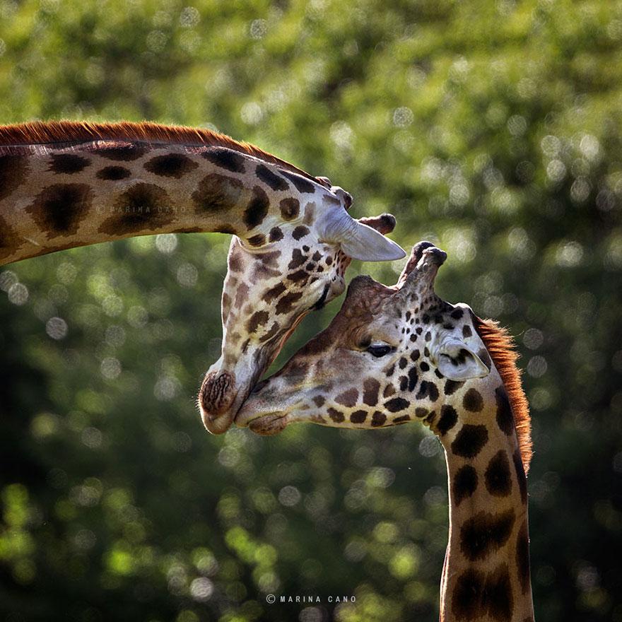 animal-wildlife-photography-marina-cano-6