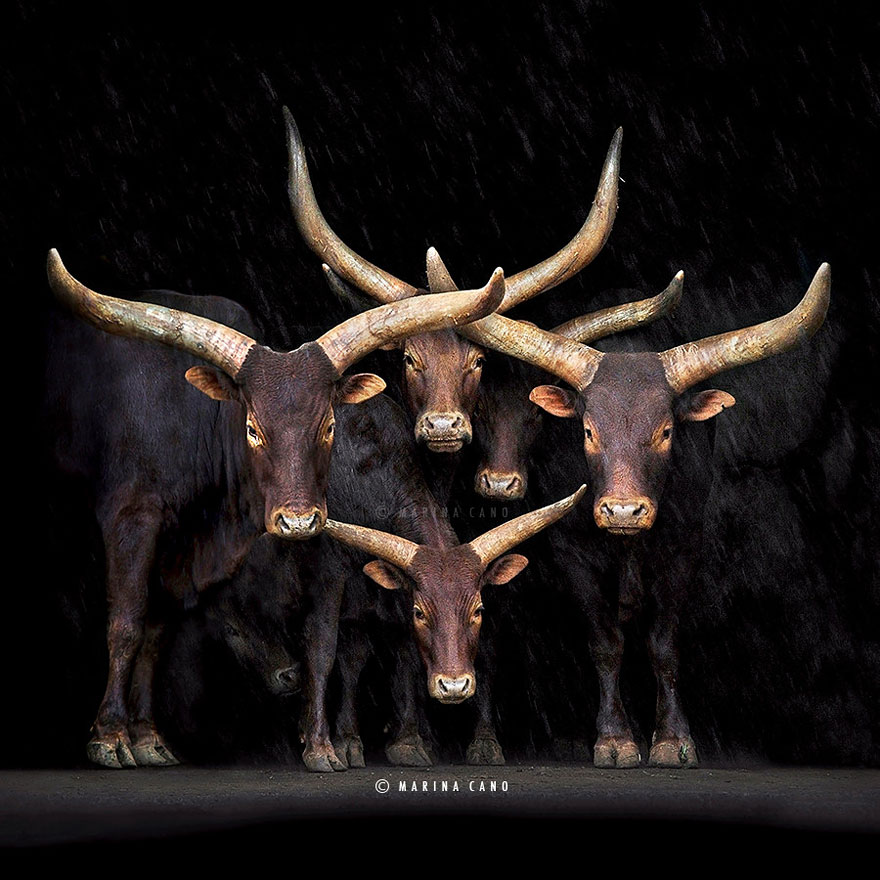 animal-wildlife-photography-marina-cano-8