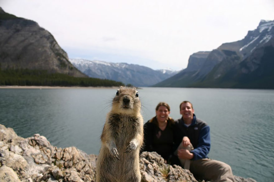 animales-photobomb-divertido (1)