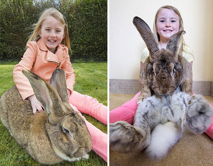 conejo-mas-grande-del-mundo (2)