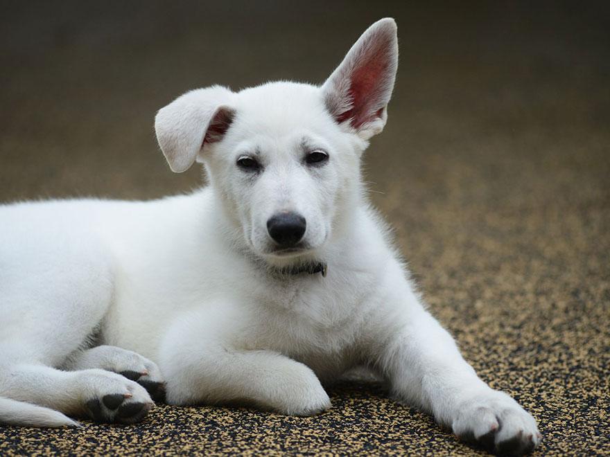 nina-amputada-perro-sin-pata-terapeutico-sapphyre-johnson (1)