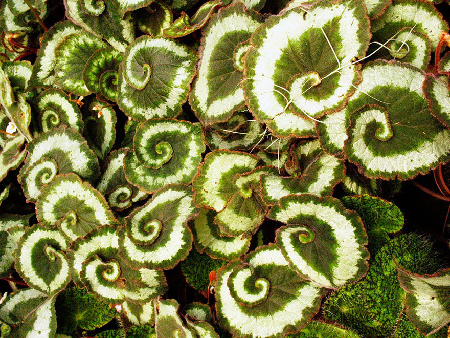 plantas-geometricas (12)