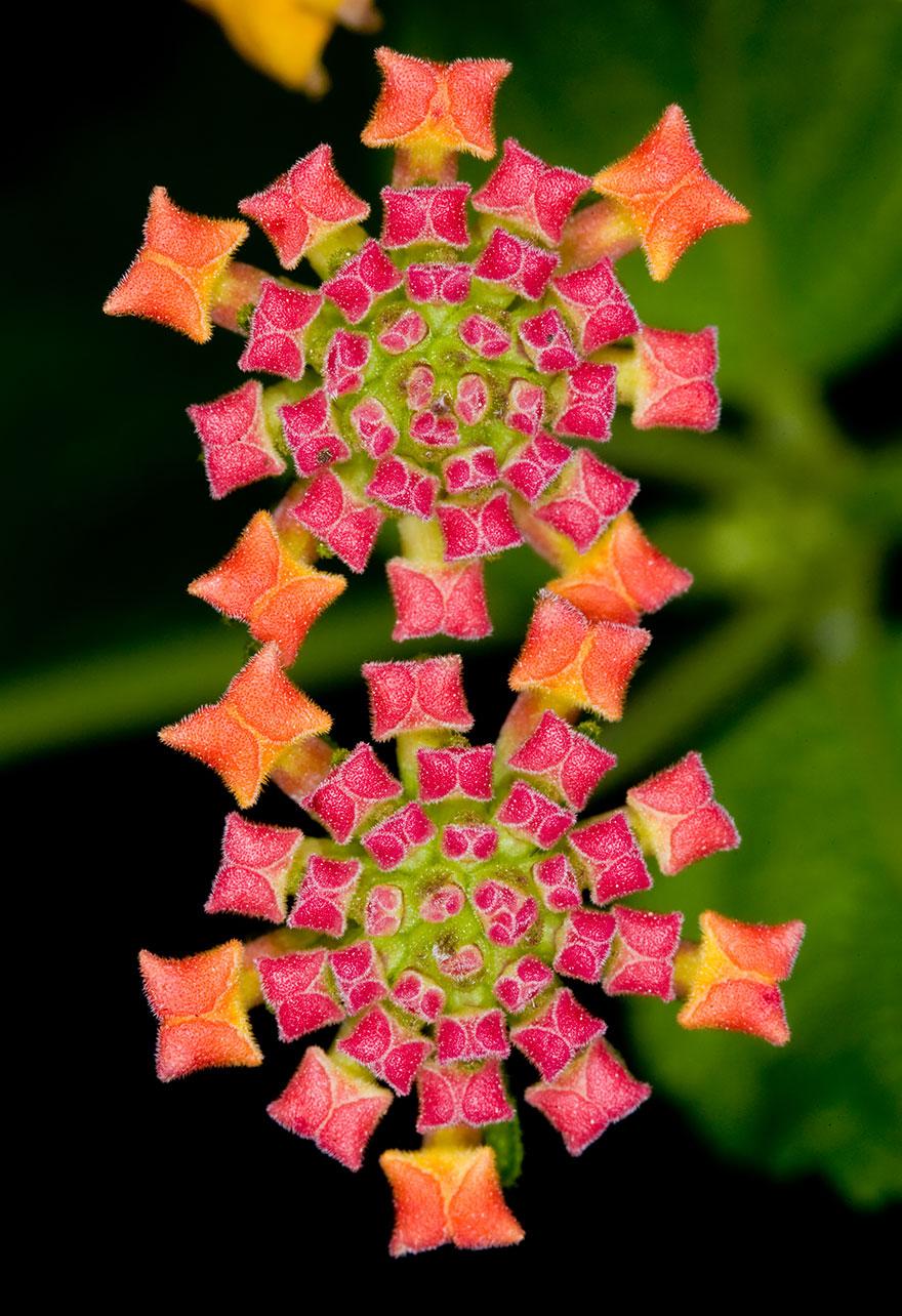 plantas-geometricas (17)