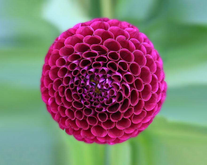 plantas-geometricas (4)
