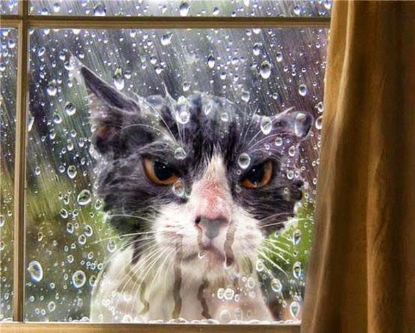 animales-pidiendo-entrar (6)