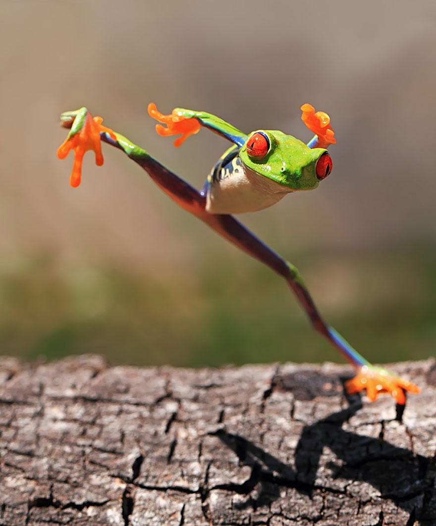 fotos-curiosas-ranas-anfibios (17)