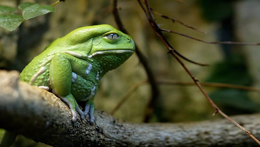 fotos-curiosas-ranas-anfibios (27)