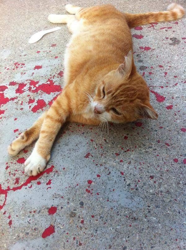 ilusion-optica-gato-sangre-pintura (4)