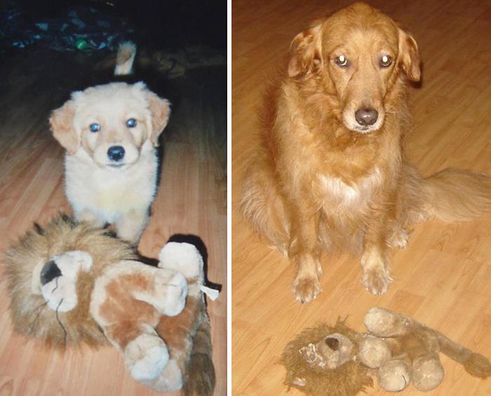 mascotas-creciendo-juguetes (30)