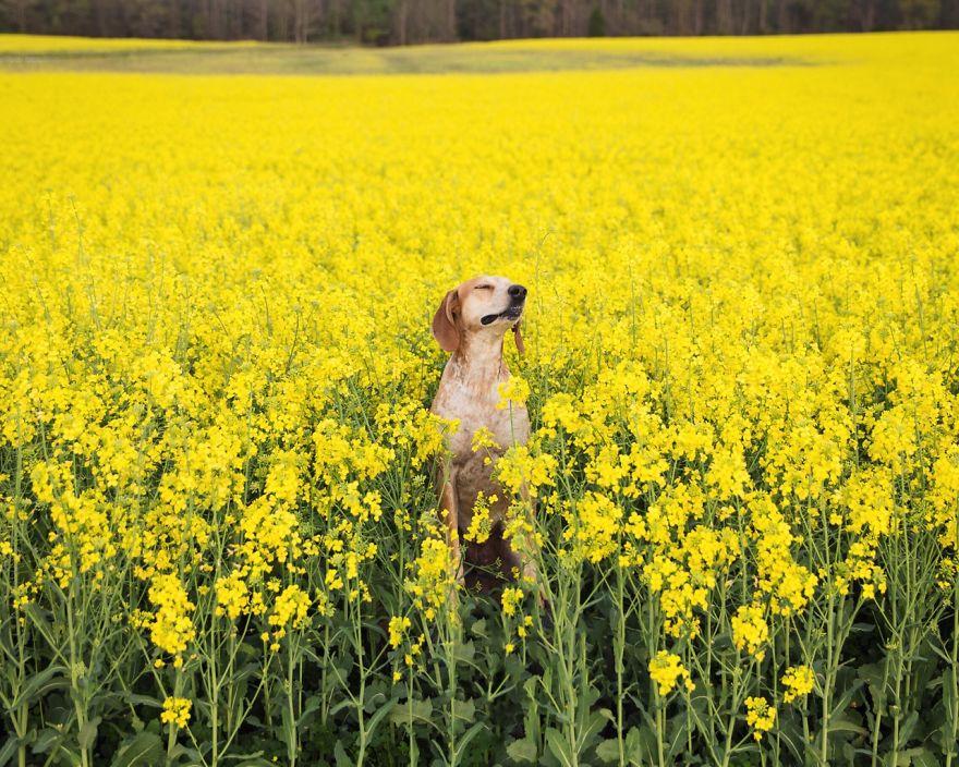 perro-maddie-viajes-moto-theron-humphrey (6)