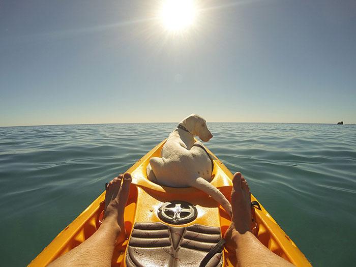 perro-rescatado-pegasus-creciendo-dave-meinert (2)