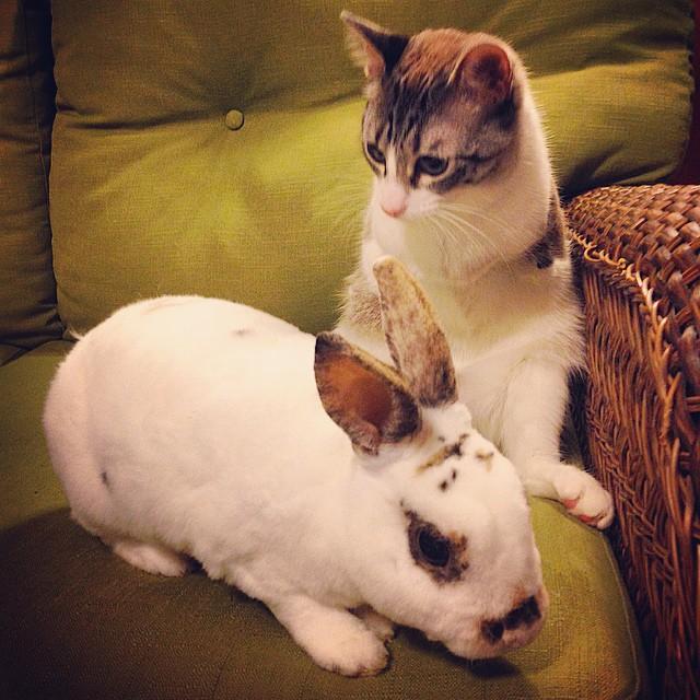 roux-gato-adoptado-2-patas-instagram (2)