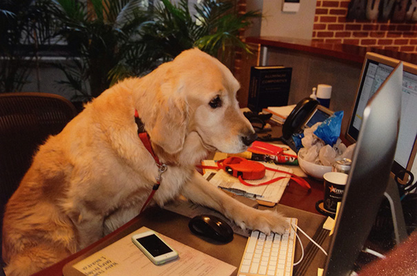 bring-puppy-to-work-19__605